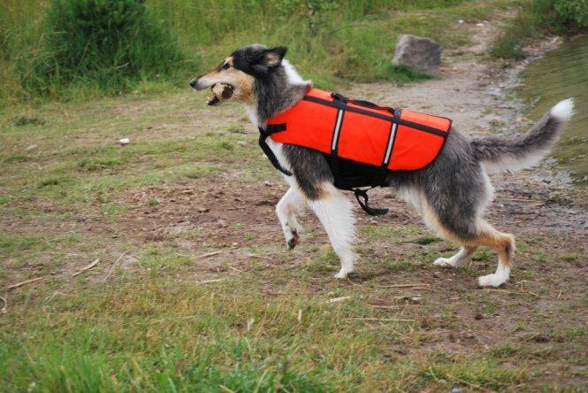 Foto: Emma Löfstedt! Hund: Unghunden (?) Kezo!